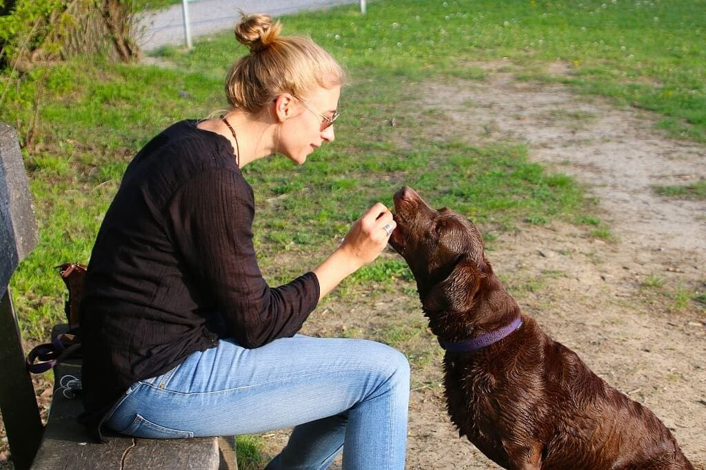 dosing cbd oil for dogs guidelines to follow