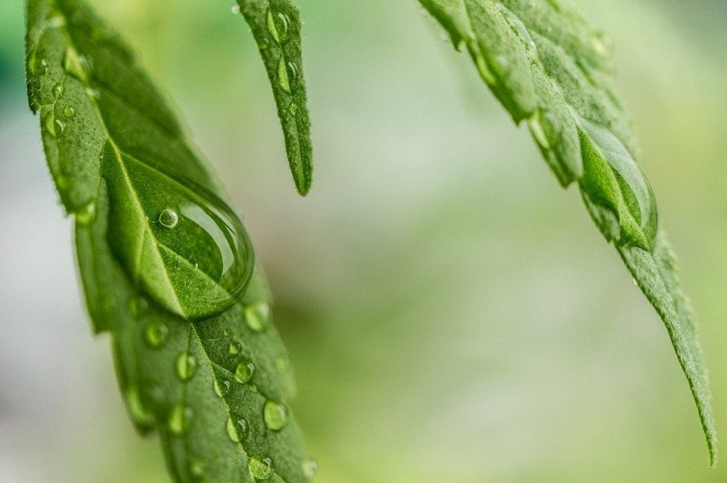 difference between hemp oil and cbd