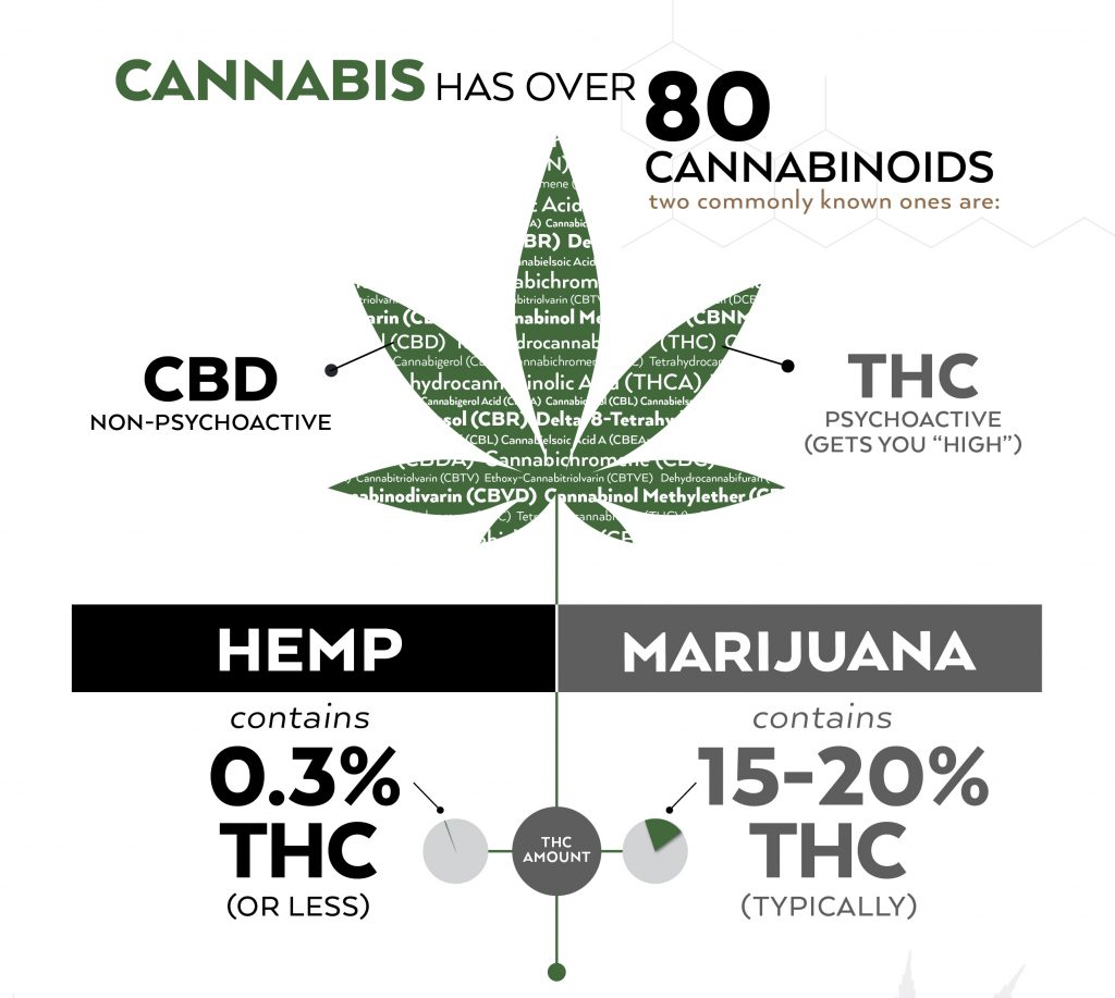 the difference between cbd from hemp and marijuana