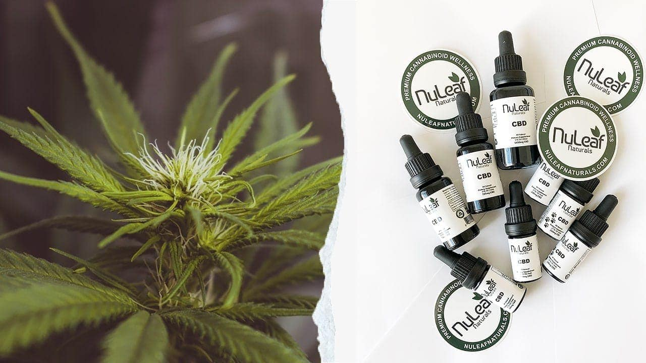 Does CBD Oil Have Same Benefits as THC