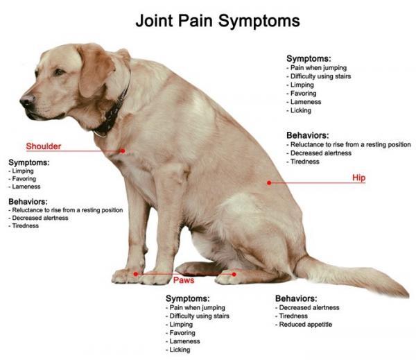 cbd dog arthritis
