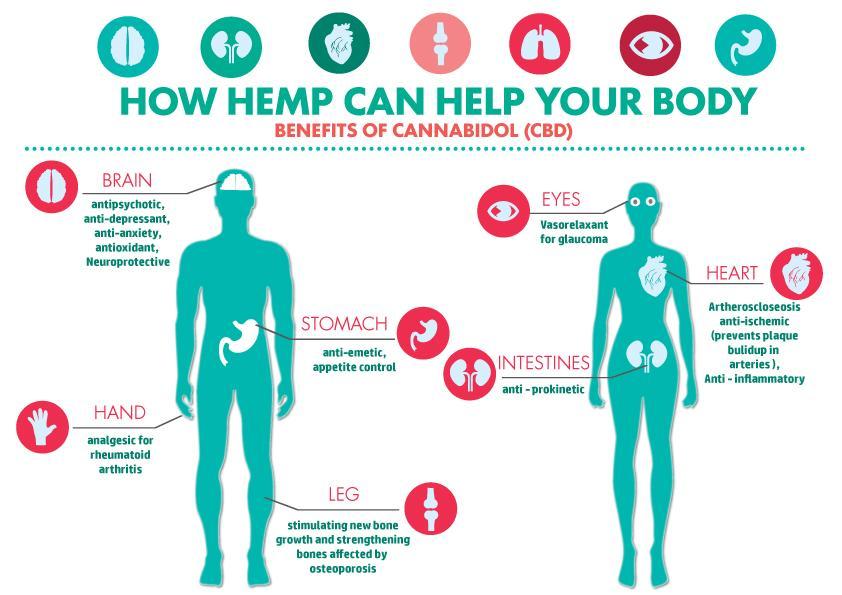 CBD Appetite Stimulant for the Endocannabinoid System