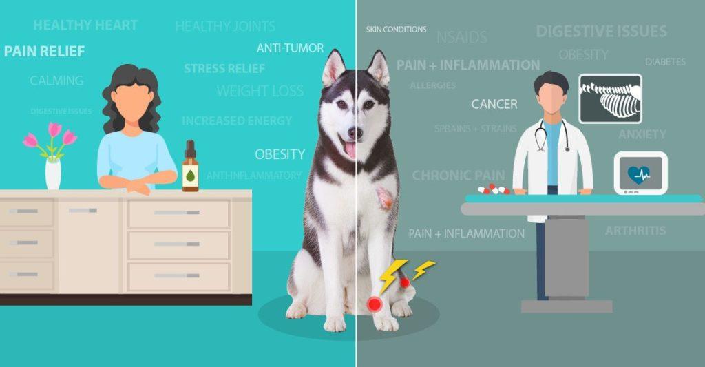 CBD Dog Treats for Pain