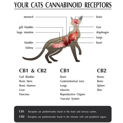 cbd for cats benefits