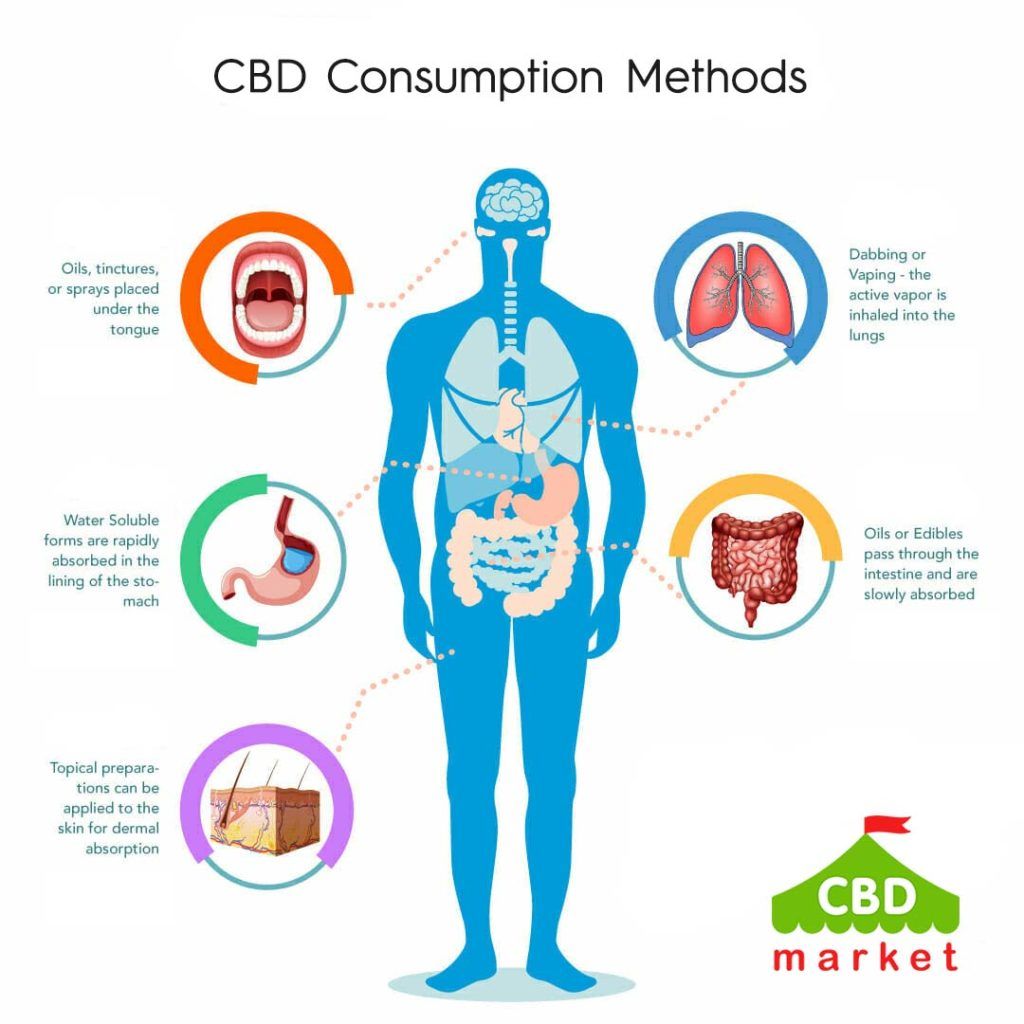 CBD Absorption and Consumption Methods