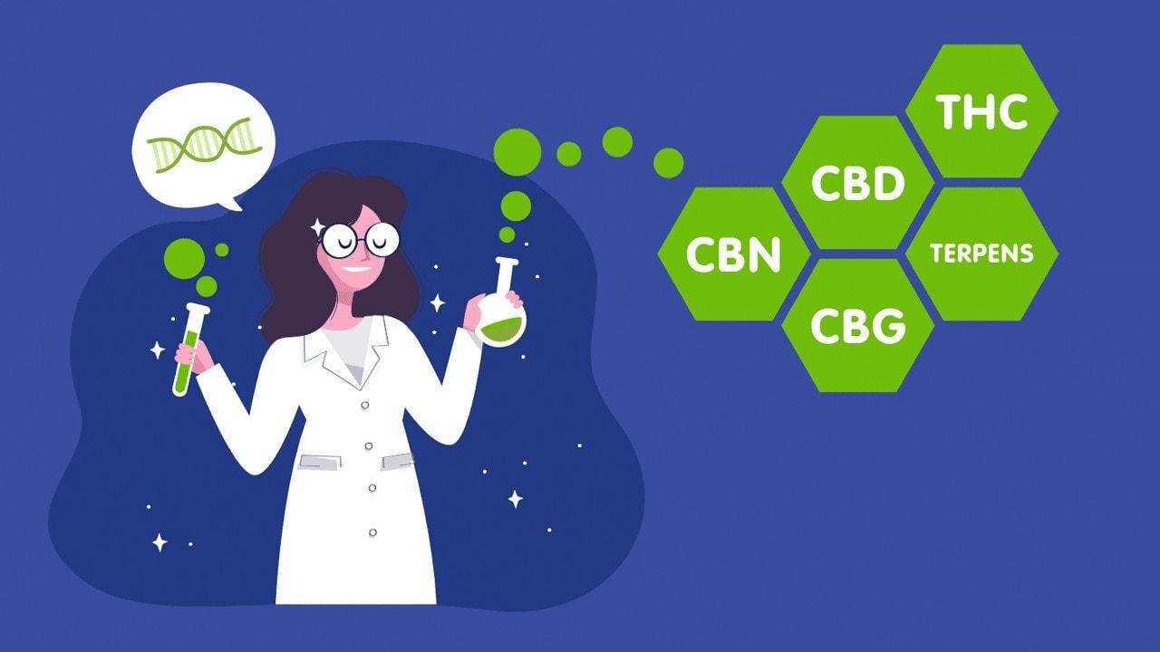 CBD.market Three Easy Steps to Choose CBD Oil Preview Infographics