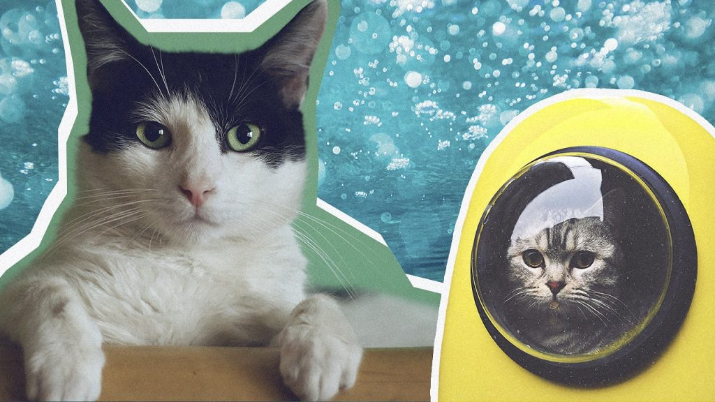 CBD oil for cats: treats, tinctures, pills