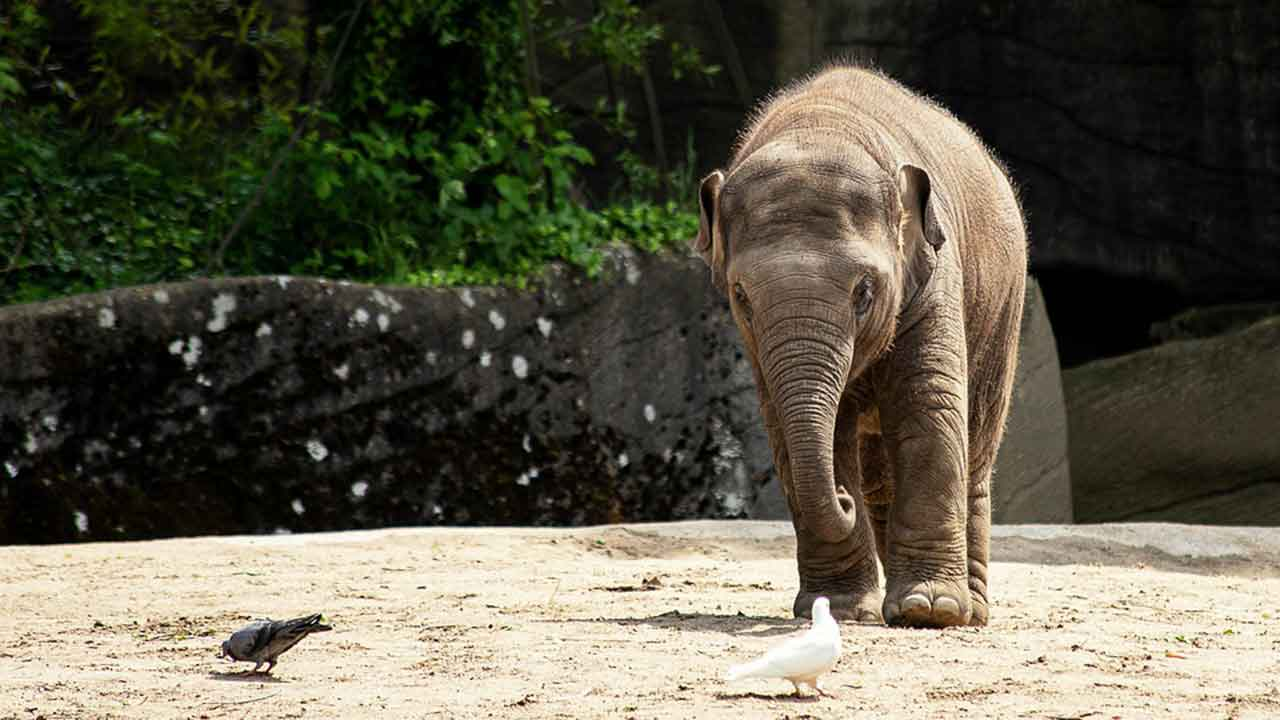 ow Can CBD Oil Help Elephants Feel Relaxed?