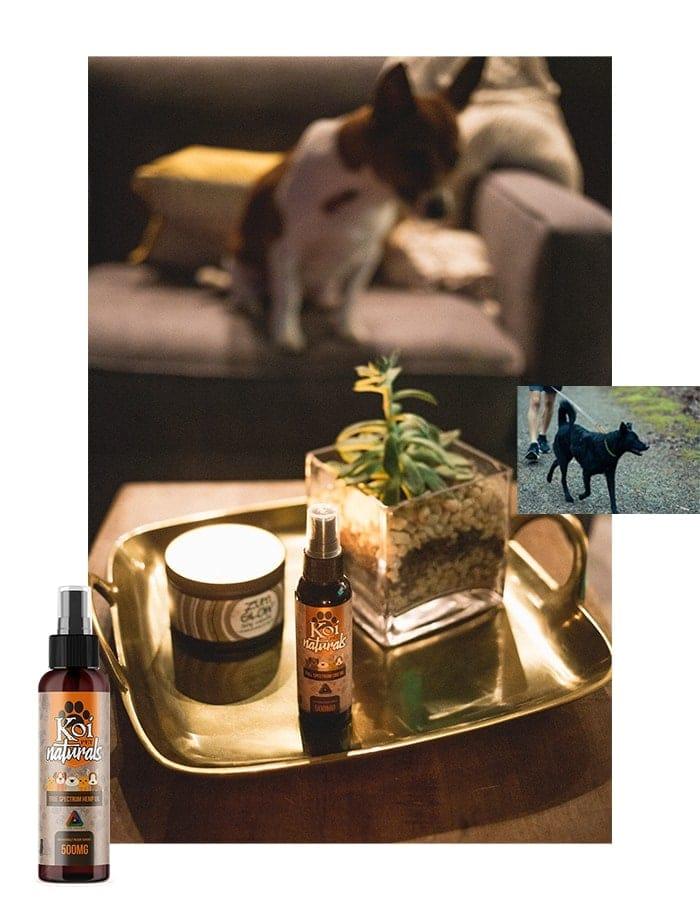 Koi CBD, Hemp Extract CBD Pet Spray, 2.7oz, 500mg of CBD2