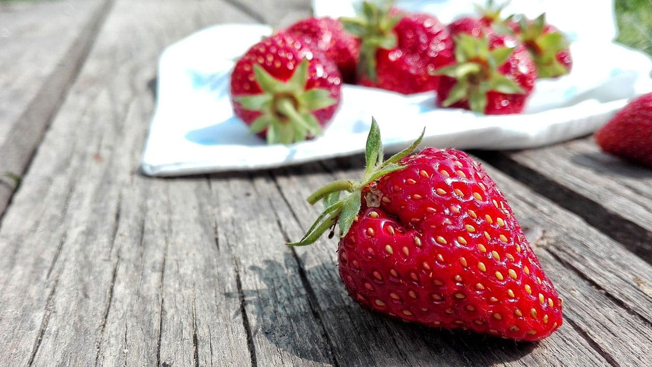 Can CBD keep fruit and berries fresh?