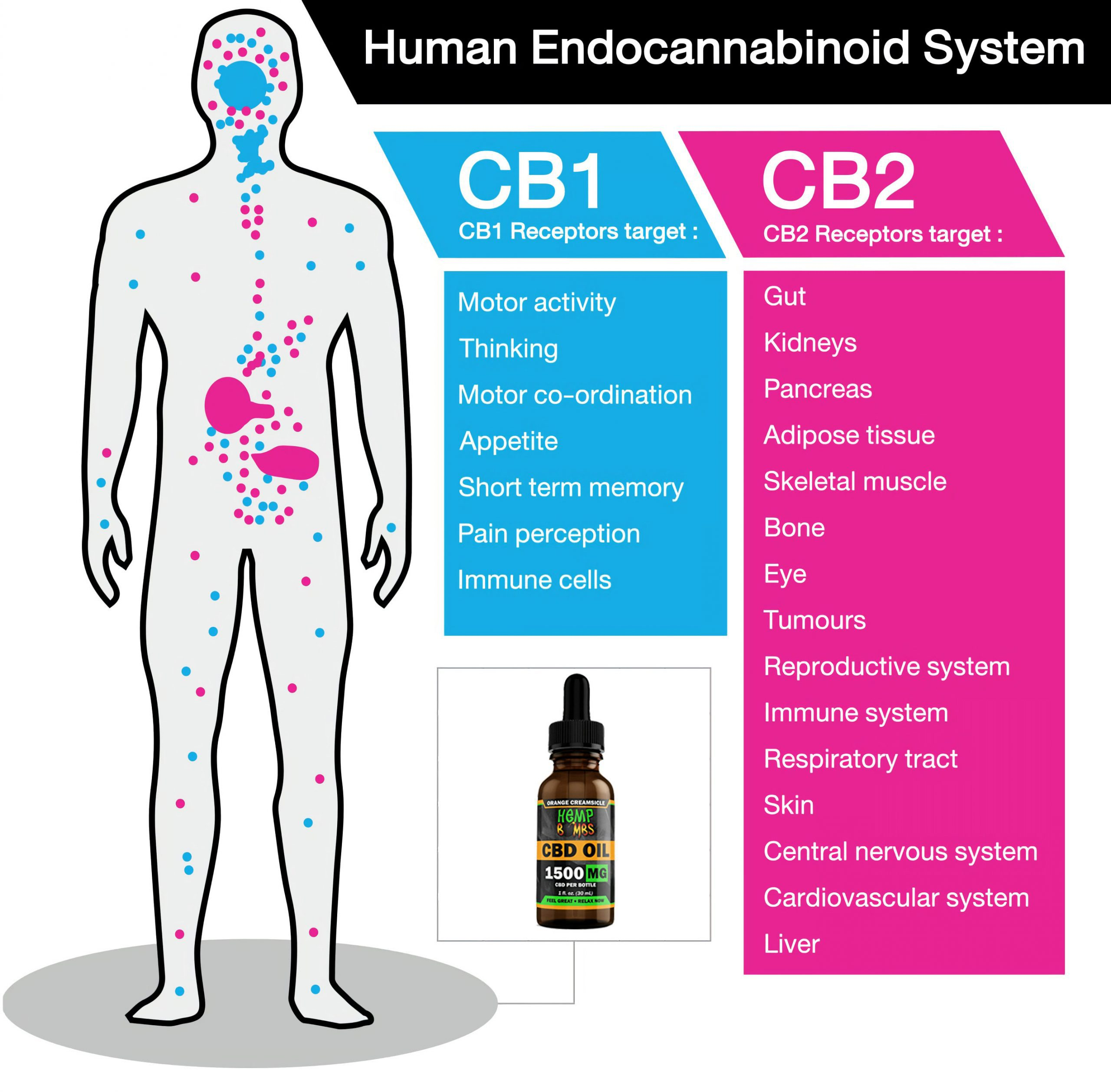CBD takes over the endocannabinoid system and might encourage your system to produce more endocannabinoids, which helps your body maintain balance