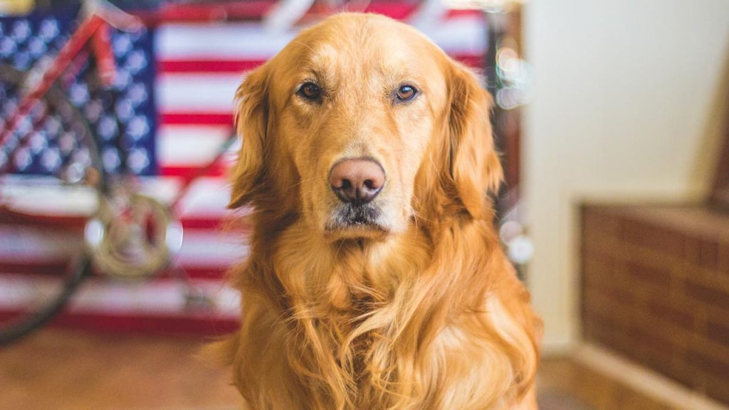 Veterinarians in Two States Can Now Officially Consult Pet Owners on CBD Medications