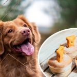 How to Make CBD Dog Treats, Oils and Salve