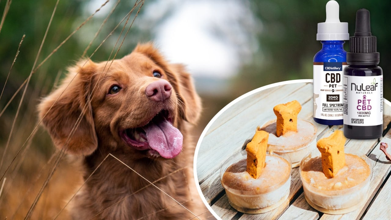 How to Make CBD Dog Treats, Oils and Salve