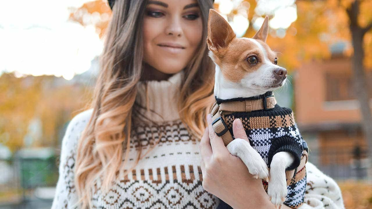CBD products for pets have gained more popularity in 2021