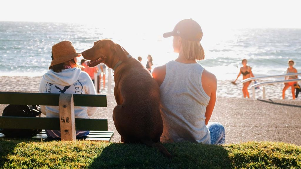 Owners Increasingly Turn to CBD to Comfort Their Pets