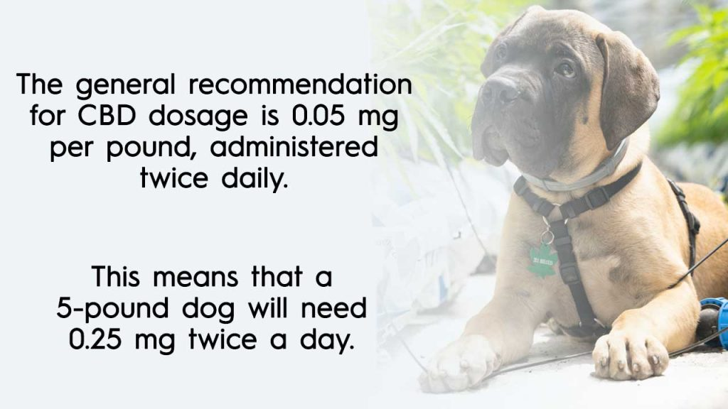 The general recommendation is 0.05 mg per pound, administered twice daily. This means that a 5-pound dog will need 0.25 mg twice a day.